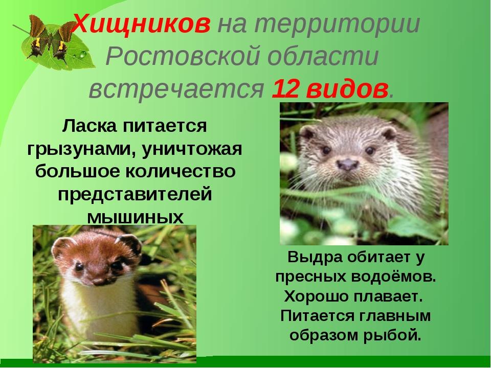Хищников на территории Ростовской области встречается 12 видов. Ласка питаетс...