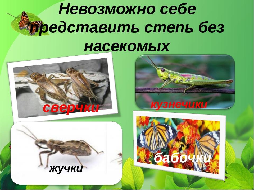Невозможно себе представить степь без насекомых сверчки кузнечики бабочки жучки