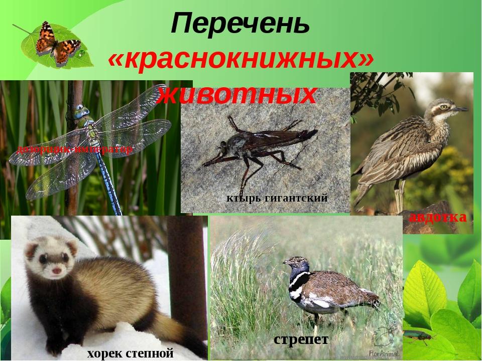 Перечень «краснокнижных» животных дозорщик-император ктырь гигантский авдотка...