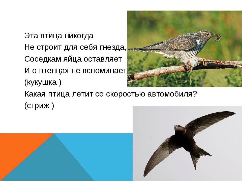 Эта птица никогда Не строит для себя гнезда, Соседкам яйца оставляет И о птен...