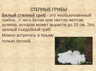 Белый степной гриб - это необыкновенный грибок. У него белая или светло-желта