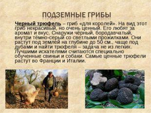 Черный трюфель – гриб «для королей». На вид этот гриб некрасивый, но очень ц