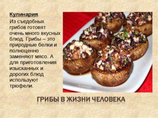 Кулинария. Из съедобных грибов готовят очень много вкусных блюд. Грибы – это