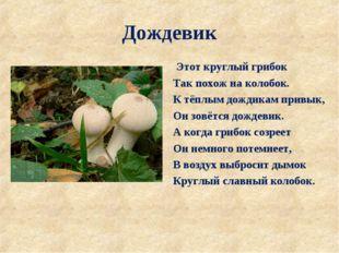Дождевик Этот круглый грибок Так похож на колобок. К тёплым дождикам привык,
