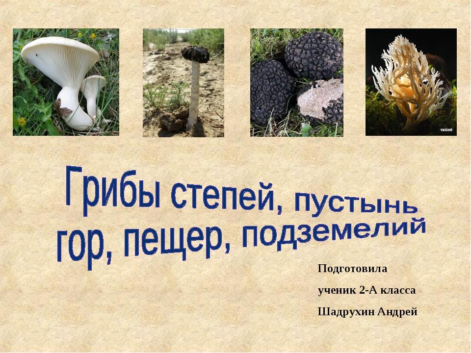 Подготовила ученик 2-А класса Шадрухин Андрей