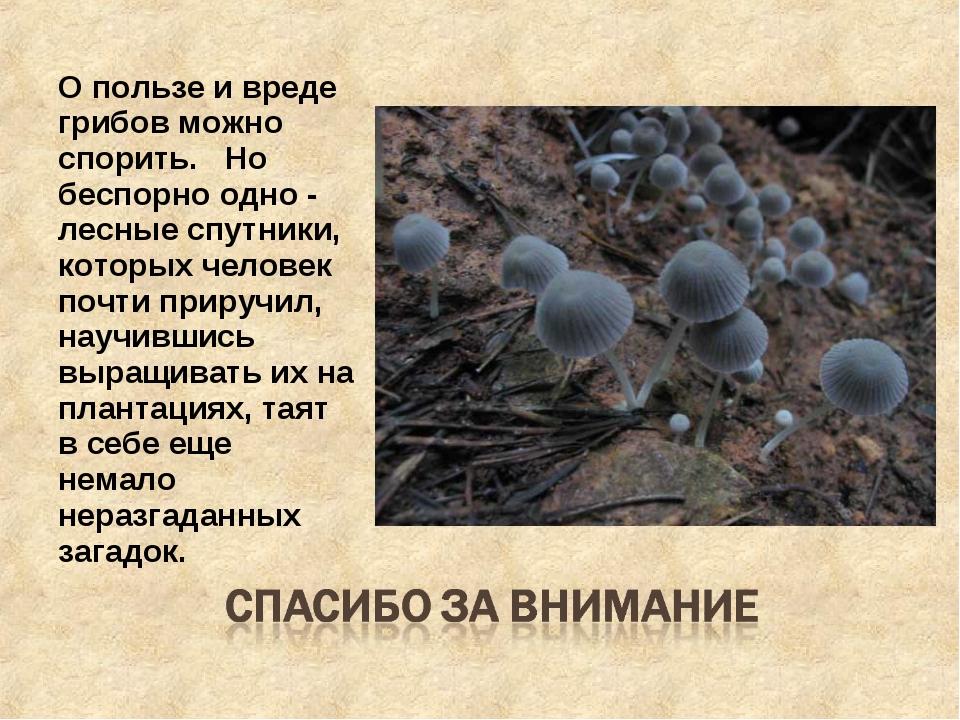 О пользе и вреде грибов можно спорить.  Но беспорно одно - лесные спутники,...