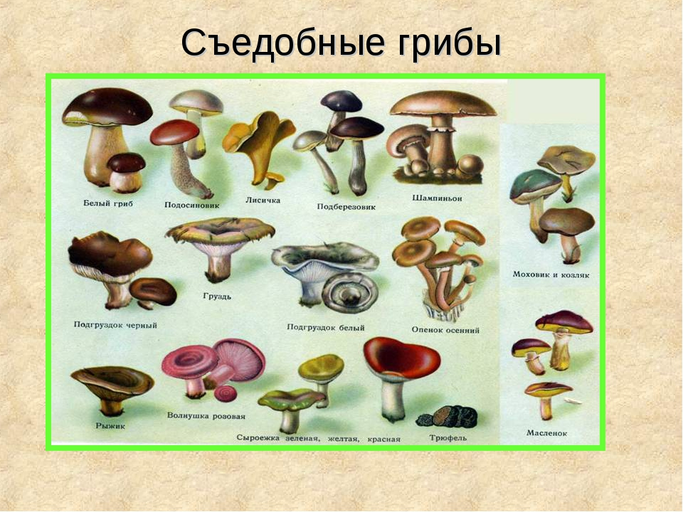 певицы все грибы фото с названиями съедобные и несъедобные каталог люба отработала