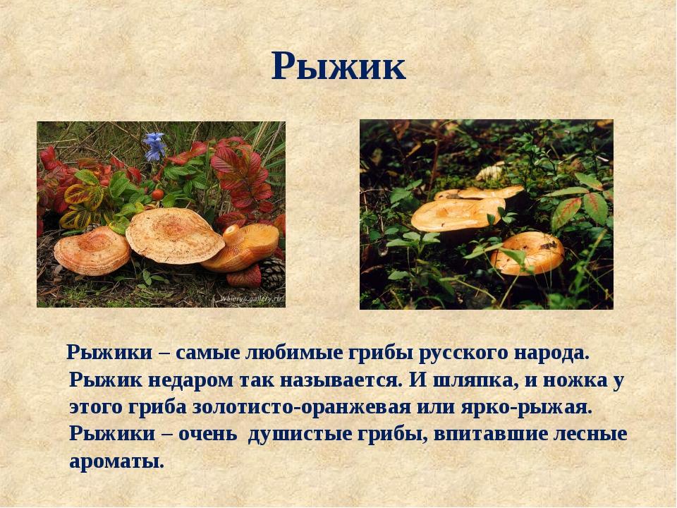 Рыжик Рыжики – самые любимые грибы русского народа. Рыжик недаром так называе...