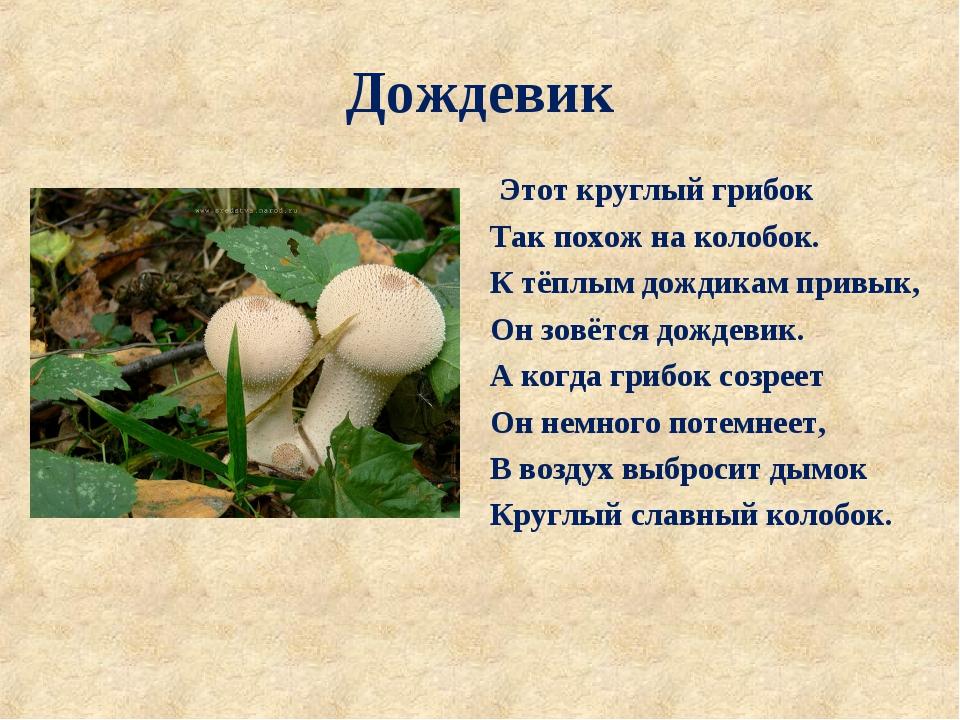 Дождевик Этот круглый грибок Так похож на колобок. К тёплым дождикам привык,...