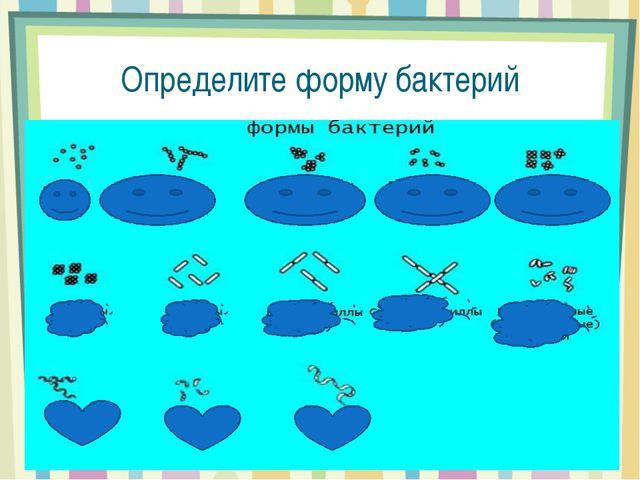 Определите форму бактерий