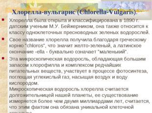 Хлорелла-вульгарис (Chlorella-Vulgaris). Хлорелла была открыта и классифицир