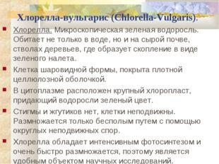 Хлорелла-вульгарис (Chlorella-Vulgaris). Хлорелла.Микроскопическая зеленая