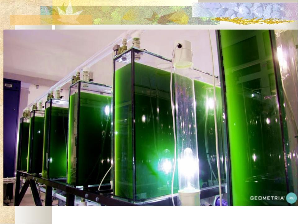 Реакторы для выращивания водорослей 1