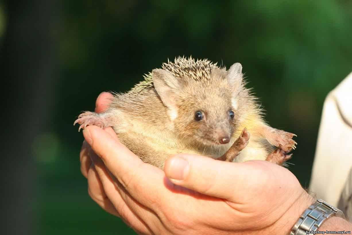 http://hedgehog-home.my1.ru/_nw/0/49187.jpg