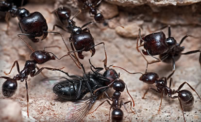 http://www.naturelifepark.com/news/foto/big/41_Ants.jpg