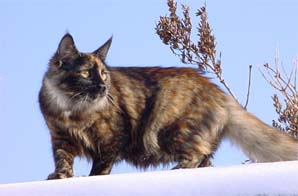 http://www.animalsprotectiontribune.ru/Riscathistory2.JPG