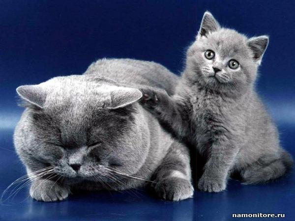 http://namonitore.ru/uploads/catalog/animals/koshka_i_kotenok_600.jpg