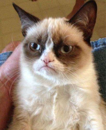 http://www.dezinfo.net/images4/image/09.2012/not_impressed_cat/not_impressed_cat_01.jpg