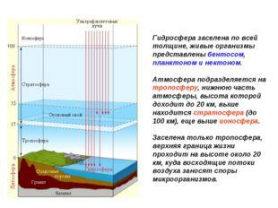 Гидросфера заселена по всей толщине, живые организмы представлены бентосом, п