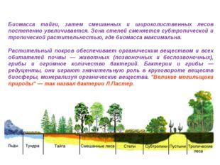 Биомасса тайги, затем смешанных и широколиственных лесов постепенно увеличива