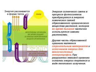 Энергия солнечного света в процессе фотосинтеза преобразуется в энергию химич