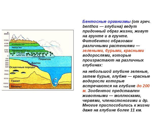 Бентосные организмы (от греч. benthos — глубина) ведут придонный образ жизни,...