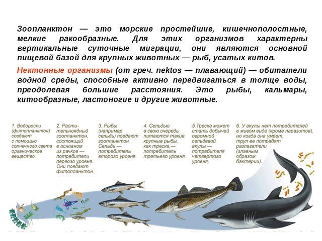 Зоопланктон — это морские простейшие, кишечнополостные, мелкие ракообразные....