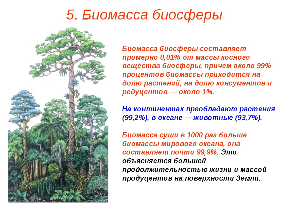 5. Биомасса биосферы Биомасса биосферы составляет примерно 0,01% от массы кос...