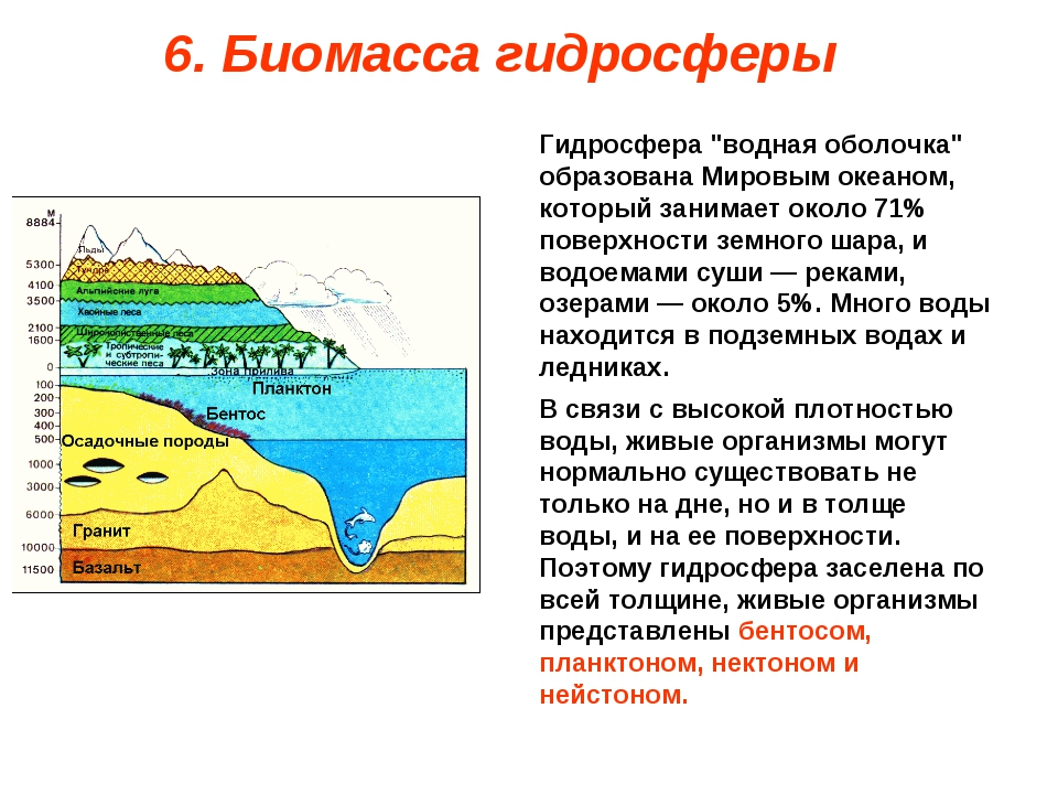 """6. Биомасса гидросферы Гидросфера """"водная оболочка"""" образована Мировым океано..."""