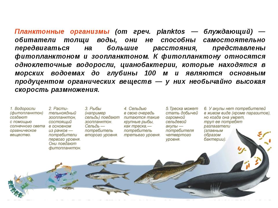 Планктонные организмы (от греч. planktos — блуждающий) — обитатели толщи воды...