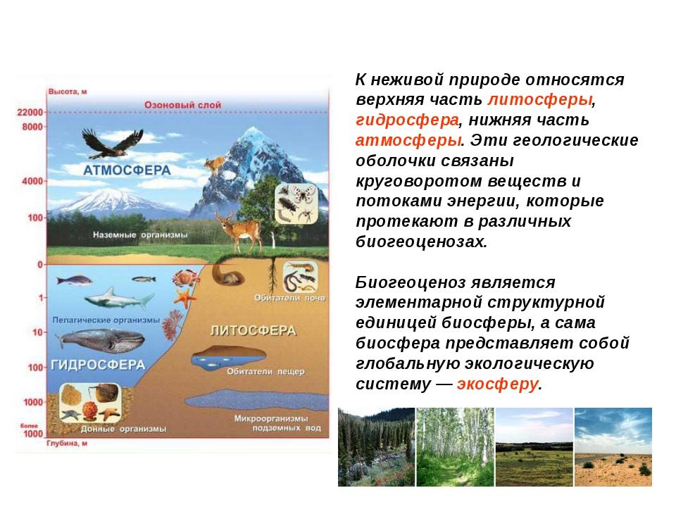 К неживой природе относятся верхняя часть литосферы, гидросфера, нижняя часть...