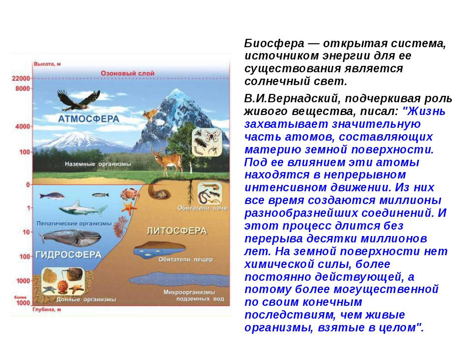 Биосфера — открытая система, источником энергии для ее существования является...