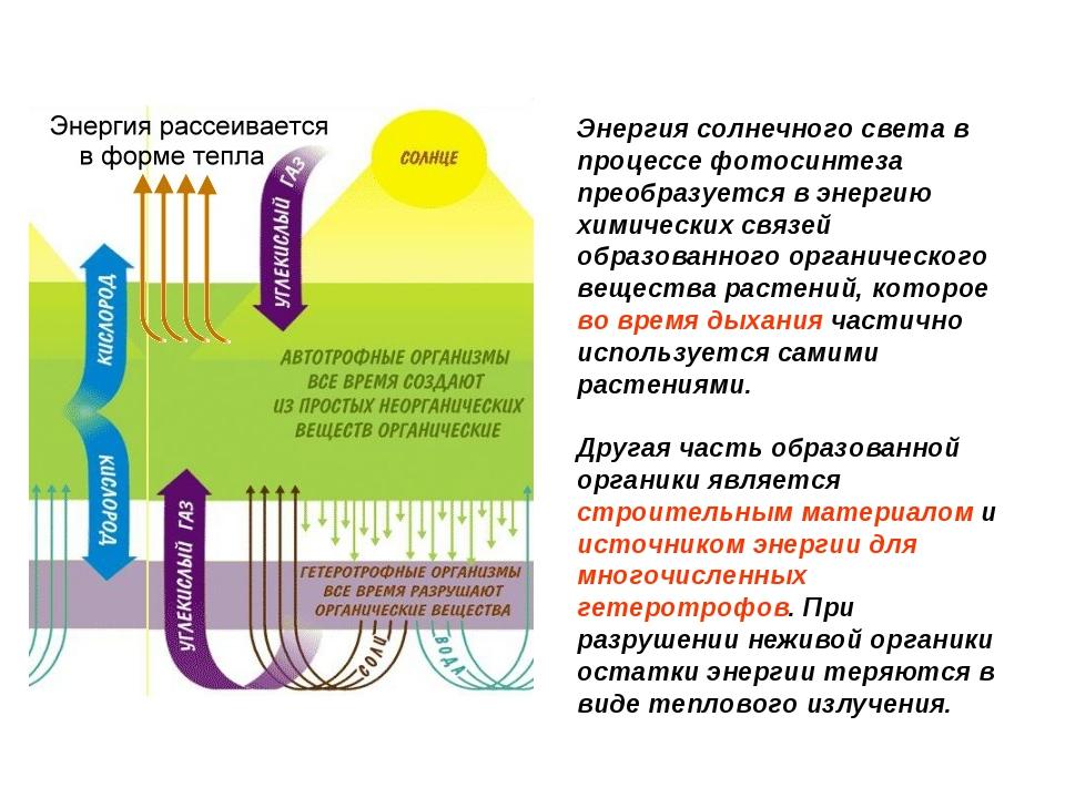 Энергия солнечного света в процессе фотосинтеза преобразуется в энергию химич...