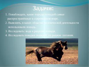 Задачи: 1. Понаблюдать, какие породы лошадей самые распространённые в совреме