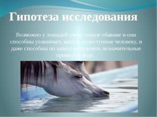 Гипотеза исследования Возможно у лошадей очень тонкое обаяние и они способны