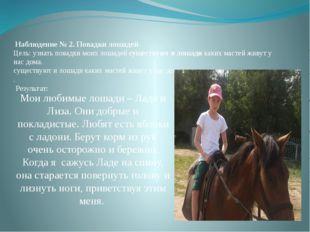 Наблюдение № 2. Повадки лошадей Цель:узнать повадки моих лошадей существу