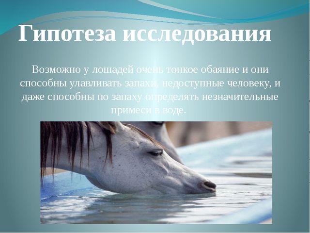 Гипотеза исследования Возможно у лошадей очень тонкое обаяние и они способны...