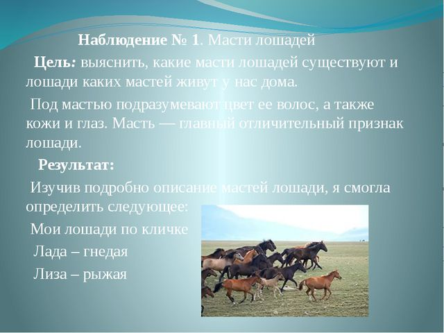 Наблюдение № 1. Масти лошадей Цель:выяснить, какие масти лошадей существую...