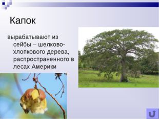 Капок вырабатывают из сейбы – шелково-хлопкового дерева, распространенного в