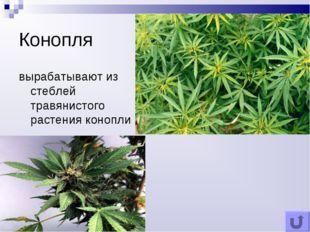 Конопля вырабатывают из стеблей травянистого растения конопли
