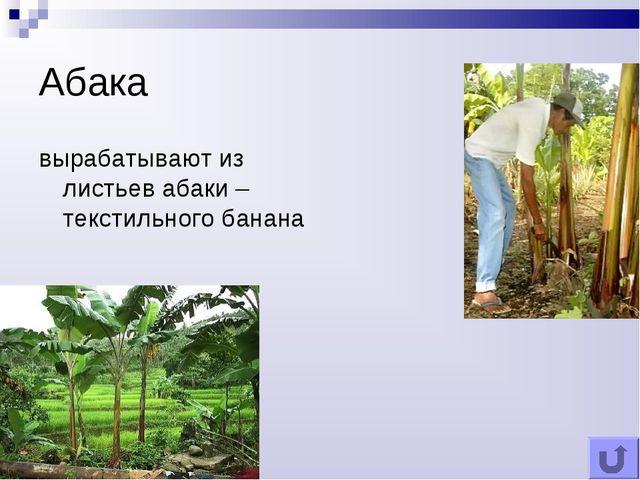 Абака вырабатывают из листьев абаки – текстильного банана