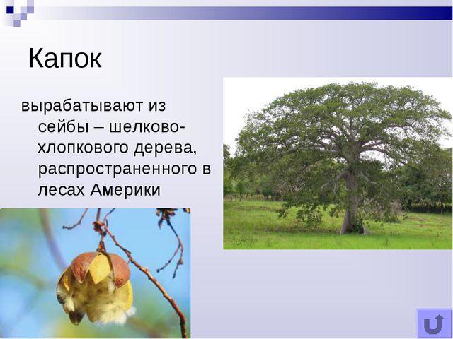 Капок вырабатывают из сейбы – шелково-хлопкового дерева, распространенного в...