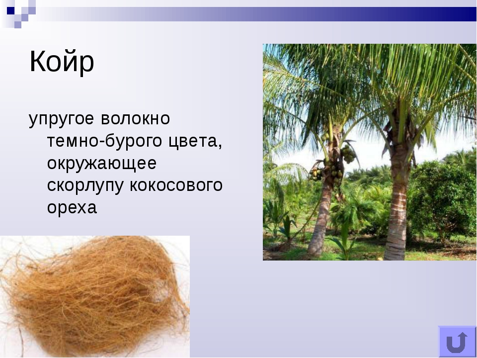 Койр упругое волокно темно-бурого цвета, окружающее скорлупу кокосового ореха