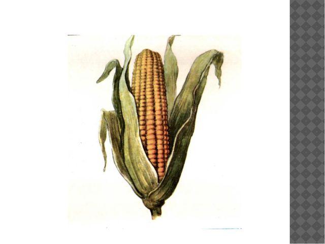 Кукуру