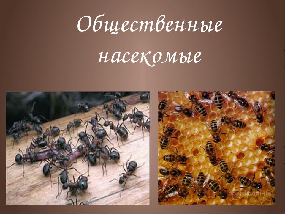 Общественные насекомые