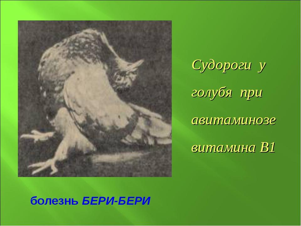 Судороги у голубя при авитаминозе витамина В1 болезнь БЕРИ-БЕРИ