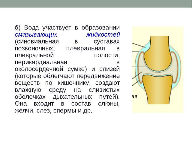 б) Вода участвует в образовании смазывающих жидкостей (синовиальная в сустава...