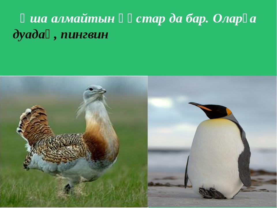 Ұша алмайтын құстар да бар. Оларға дуадақ, пингвин