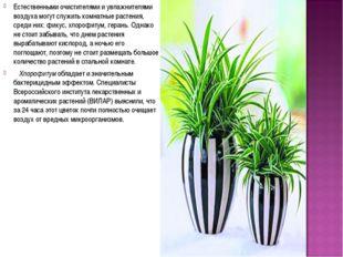 Естественными очистителями и увлажнителями воздуха могут служить комнатные ра