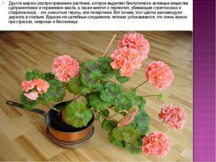 Другое широко распространенное растение, которое выделяет биологически активн